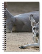 Kangaroo Relaxing On Ground In The Sun Spiral Notebook
