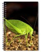 Katydid Close Up Bug Spiral Notebook