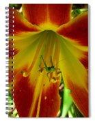 Katydid Surprise Spiral Notebook