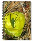 Katydid What Spiral Notebook