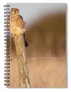 Kestrel In Evening Light Spiral Notebook