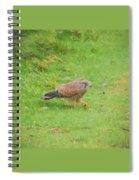 Kestrel Walking Spiral Notebook