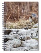 Kestrel With Prey Spiral Notebook