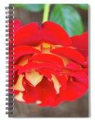 Ketchup And Mustard Rose Spiral Notebook