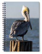 Key Largo Florida Yellow Headed Pelican Spiral Notebook