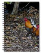 Key West Chickens Spiral Notebook
