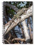 Key West Iguana In Mangrove 3 Spiral Notebook