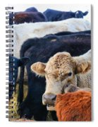 Kibler Valley Cows Spiral Notebook