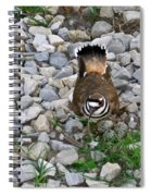Kildeer And Eggs Spiral Notebook