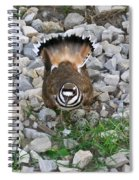 Kildeer And Nest Spiral Notebook