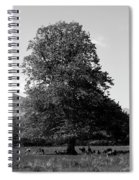 Killarney National Park, County Kerry, Ireland Spiral Notebook