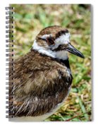 Killdeer Profile Spiral Notebook