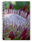 King Protea Island Flowers Jewel Of The Garden Spiral Notebook