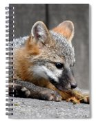 Kit Fox3 Spiral Notebook