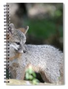 Kit Fox7 Spiral Notebook
