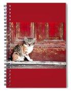 Kitten By Red Door Spiral Notebook