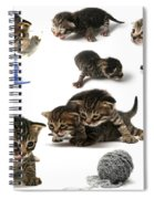 Kitten Collage Spiral Notebook