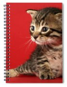 Kitten On Red Spiral Notebook
