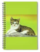 Kitten On Rock Spiral Notebook