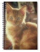 Kitten Portrait Spiral Notebook