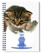Kitten Sits In A Glass  Spiral Notebook