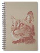 Kitten Wonder Spiral Notebook