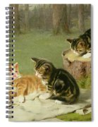 Kittens Playing Spiral Notebook