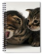 Kittens  Spiral Notebook