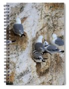 Kittiwakes Tend Their Chicks At Rspb Bempton Cliffs Spiral Notebook