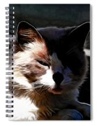 Kitty In The Shadow Spiral Notebook