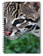 Kitty Ocelot 1 Spiral Notebook