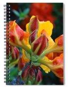 Klondyke Azalea Spiral Notebook
