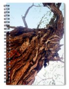 knarly Tree Spiral Notebook