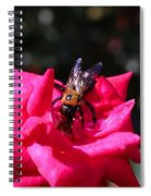 Knockout Rose And Bumblebee Spiral Notebook
