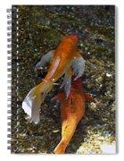 Koi-1 Spiral Notebook