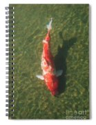 Koi  Spiral Notebook
