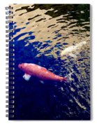 Koi On Blue And Gold Spiral Notebook