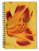 Kokomo Sunset 05 - Daylily Spiral Notebook