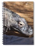 Komodo Kountry Spiral Notebook
