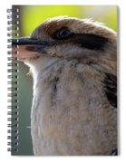 Kookaburra On A Branch Spiral Notebook