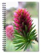 Korean Pine  Spiral Notebook