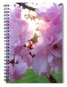 Kwanzan Cherry Blossoms Spiral Notebook