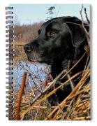 Labrador Retriever Waiting In Blind Spiral Notebook