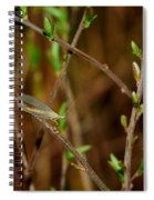 Lacewing Spiral Notebook