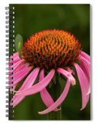 Lacewing On Echinacea Blossom Spiral Notebook