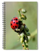 Lady Beetle Spiral Notebook
