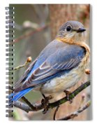 Lady Blue Spiral Notebook