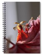 Lady Bug Flight Spiral Notebook