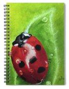 Lady Bug II Spiral Notebook
