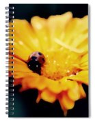 Lady Bug Walking The Line Spiral Notebook